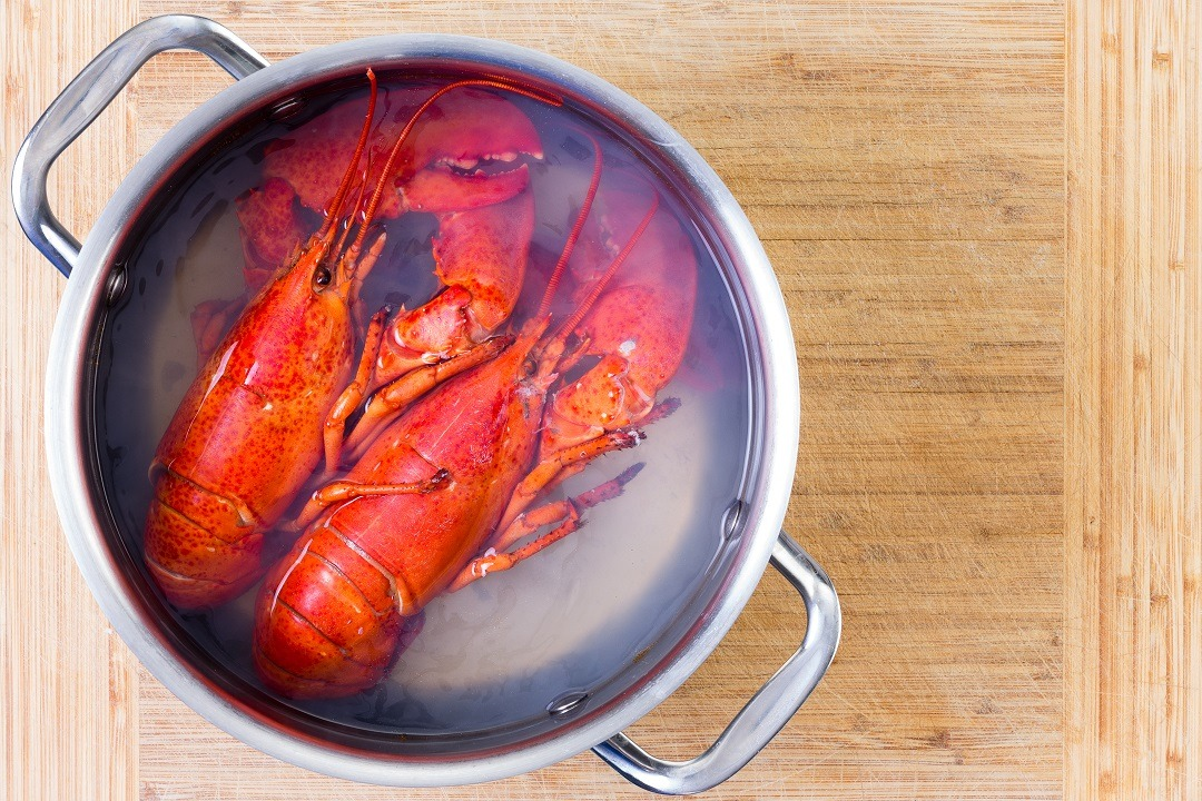 Two,Red,Lobsters,In,A,Pot,Of,Boiling,Water,Cooling